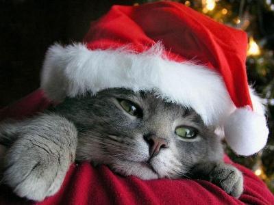 Immagini Natalizie Con Animali.Natale Anche Nostri Cani E Gatti Rischiano Di Ingrassare