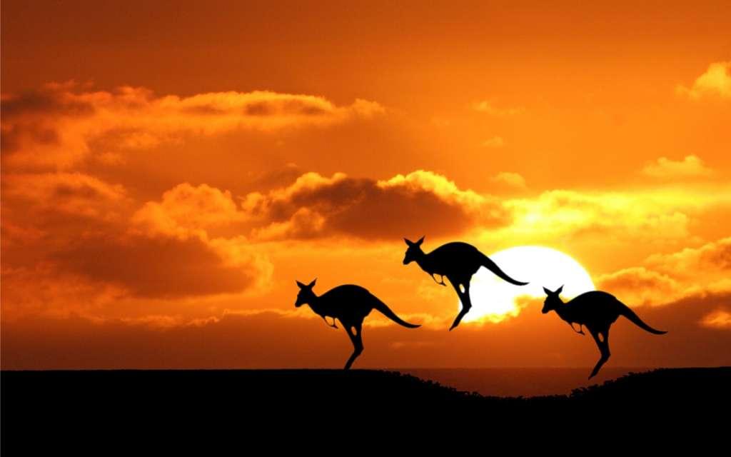 australia canguri